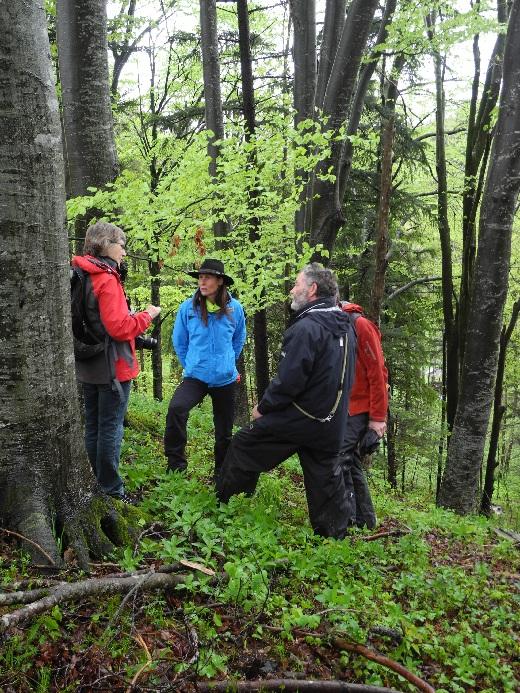 Allgäutrilogie, Wandern in sattem Grün
