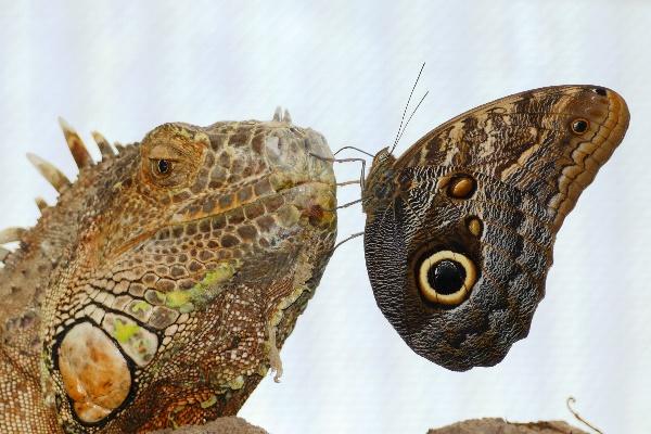 Im Garten der Schmetterlinge Foto Andrea Matzker P3610179