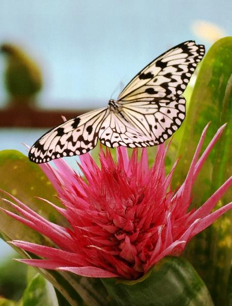 Im Garten der Schmetterlinge Foto Andrea Matzker P3610190