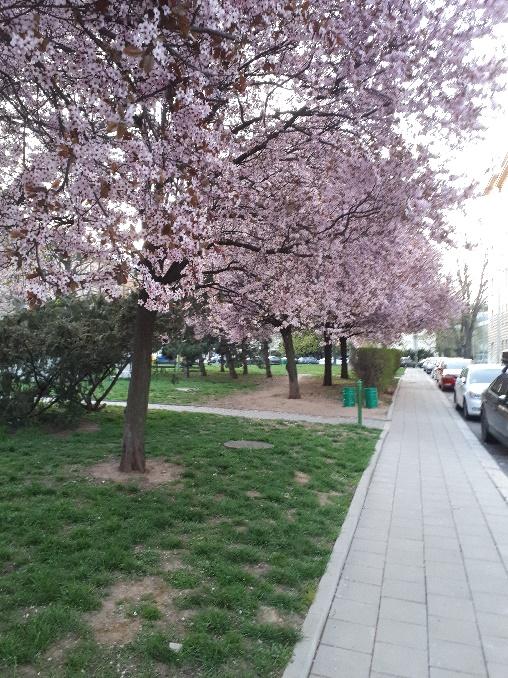 brünnerbäume01