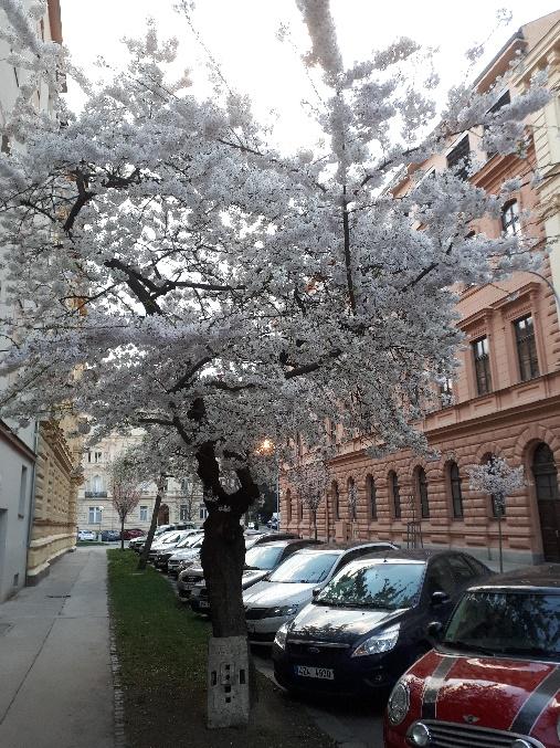 brünnerbäume02